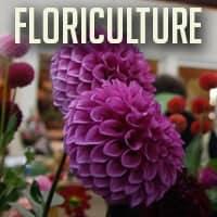 floriculture