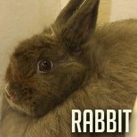 rabbitfinal